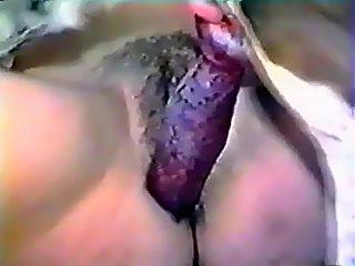 Spaniel cums in pussy women
