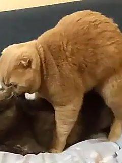 Gatitos Copulando