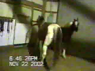 horse blowjob