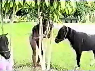 pony corriendose en una negra
