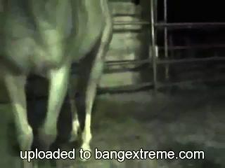 Sexo extremo con caballo