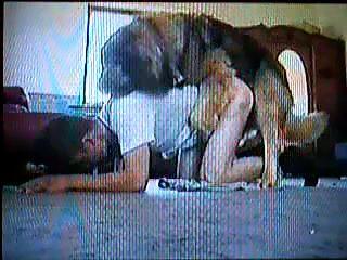 Lindo perro y gay