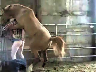 Cogido por caballo