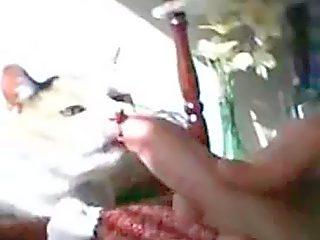De cat lick de butta