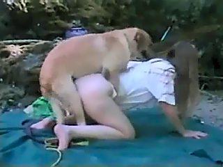 Labrador fucking milf in doggystyle