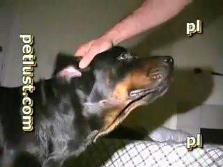 hombre se folla a perro y el al hombre