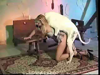 white dog fuck blonde girl