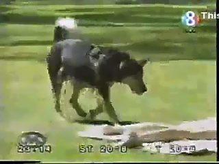 clean2 perro bien entrenado