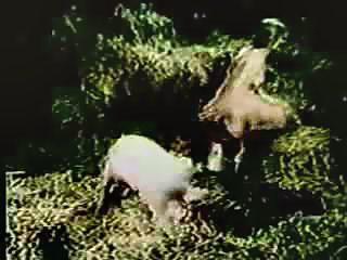 good vitage style animal sex video