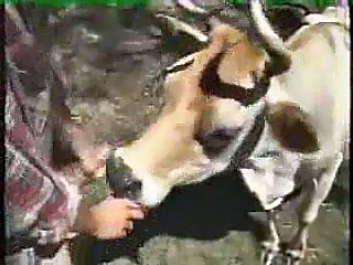 Mi vaca