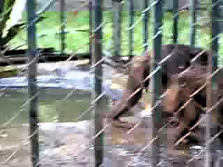 monkey sex in zoo