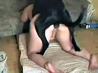 Amateur anal dog porn